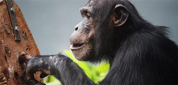 Tierversuche Ethisch Vertretbar