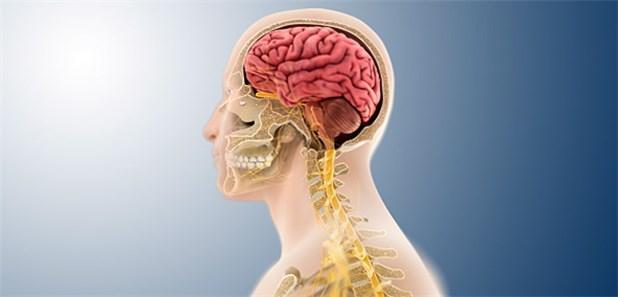 Wie der Typ 2-Diabetes das Gehirn schädigt