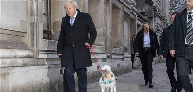 mit hund spazieren abnehmen