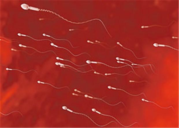 Allergisch gegen eigenes Sperma - Forscher melden